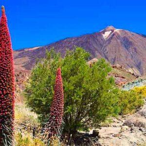 El Teide – Parque Nacional y emblema de Tenerife